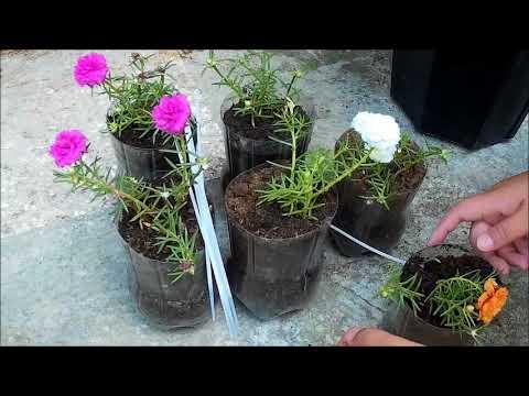 Pin On Gardening Video