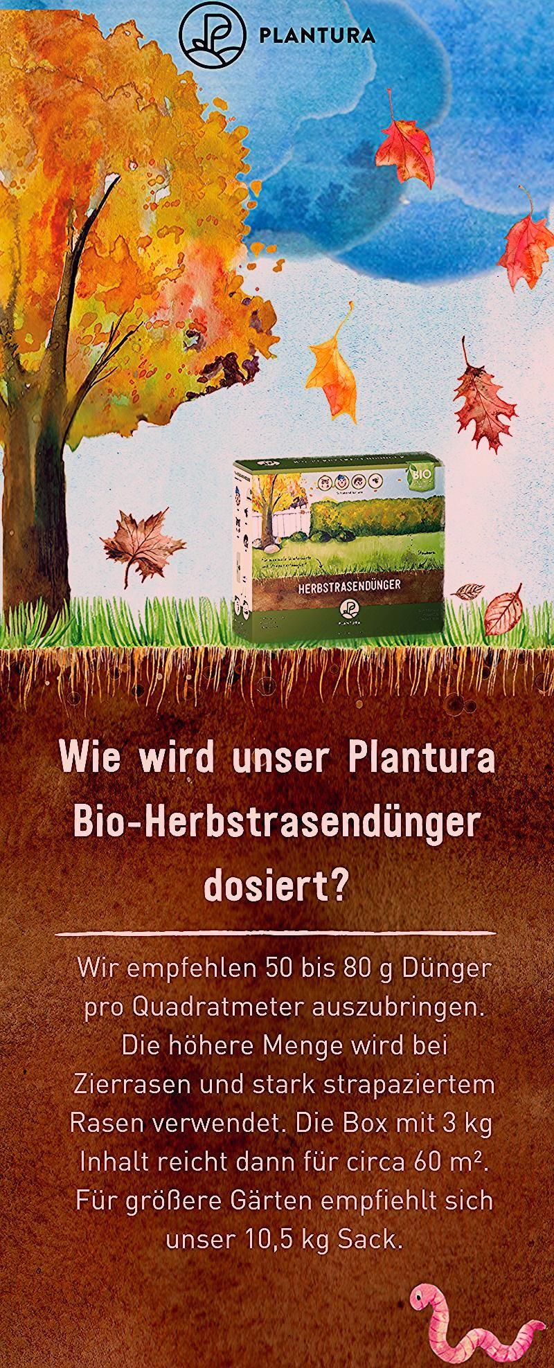 Photo of Bio-Herbstrasendünger / Box / 3 kg