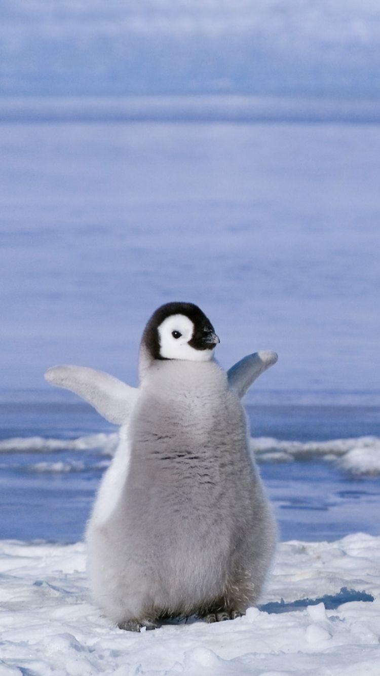 Animals Wallpaper Cute Penguin Wallpapers Desktop Background For Cute Animals Baby Penguins Cute Penguins