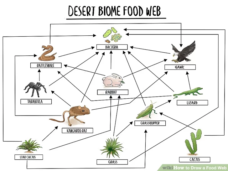 Draw a Food Web in 2020 Food web, Food web activities