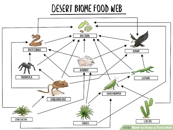 Draw a Food Web in 2020 Food web, Food web activities
