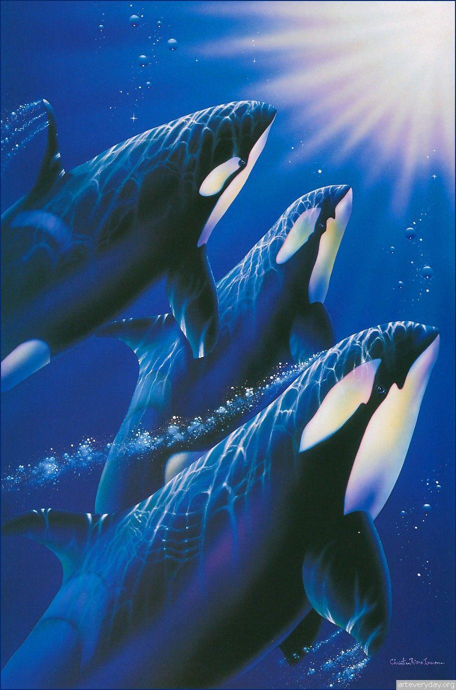 Christian Riese Lassen Wildlife Aquatic Pinterest Whale