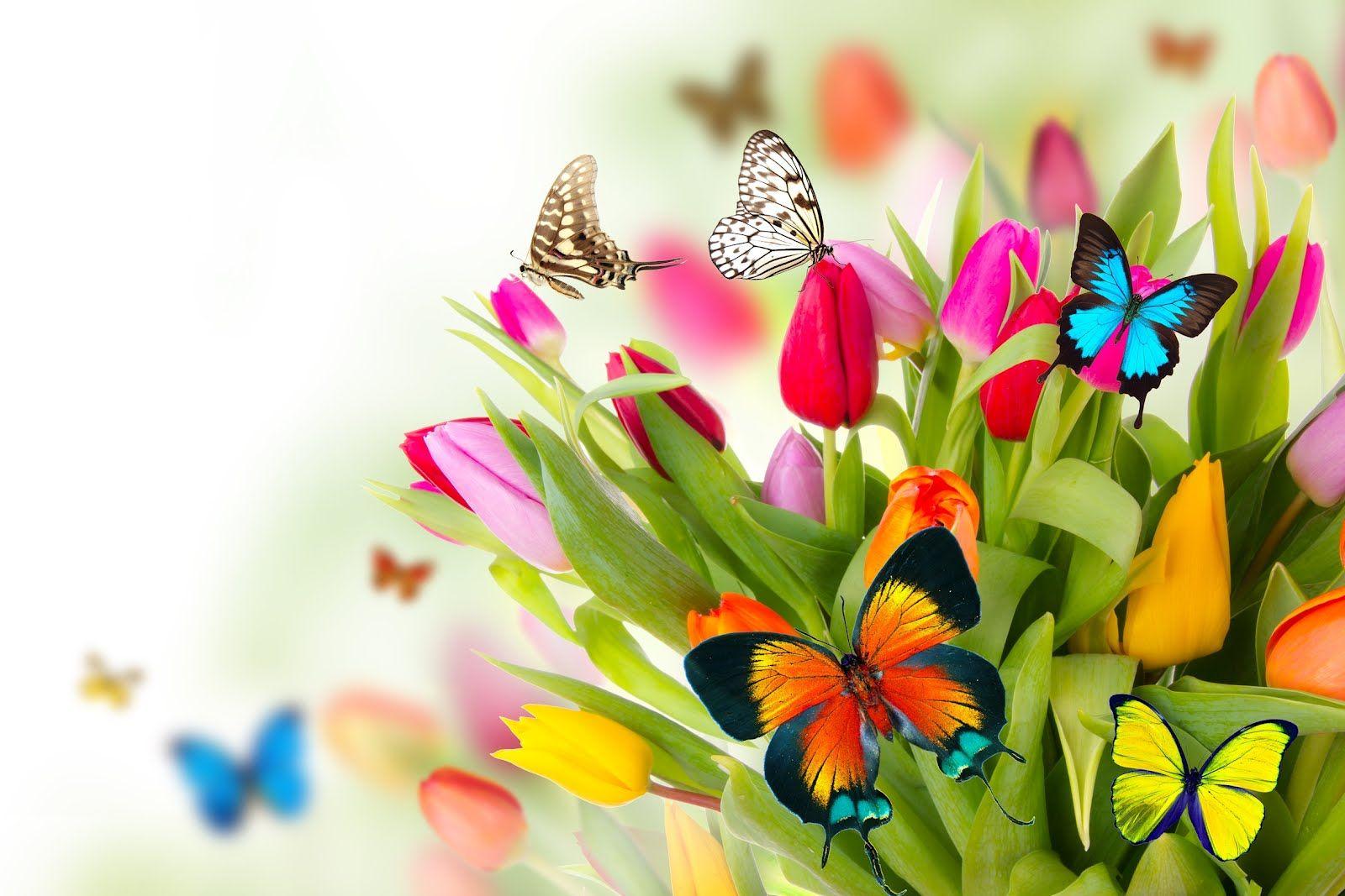 Resultado de imaxes para Mariposas primavera