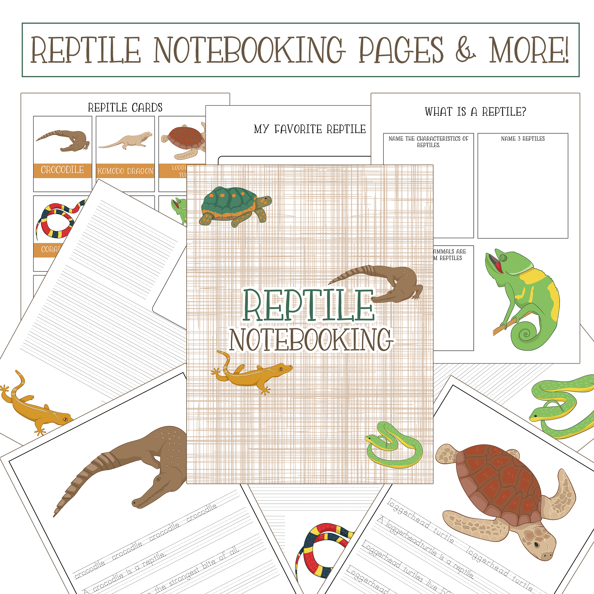 Free Worksheet Pages To Organize Information About