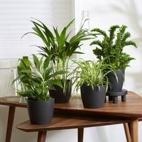 Bakker.com – Gartencenter – Pflanzen und Blumenzwiebeln online kaufen