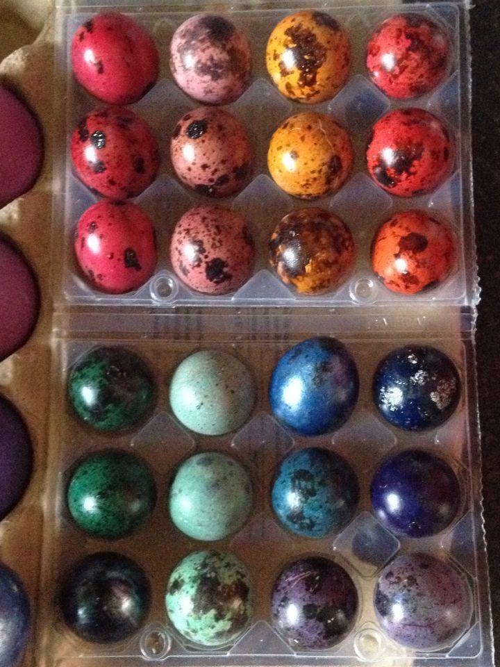 Wachteleier-Farbprogramm