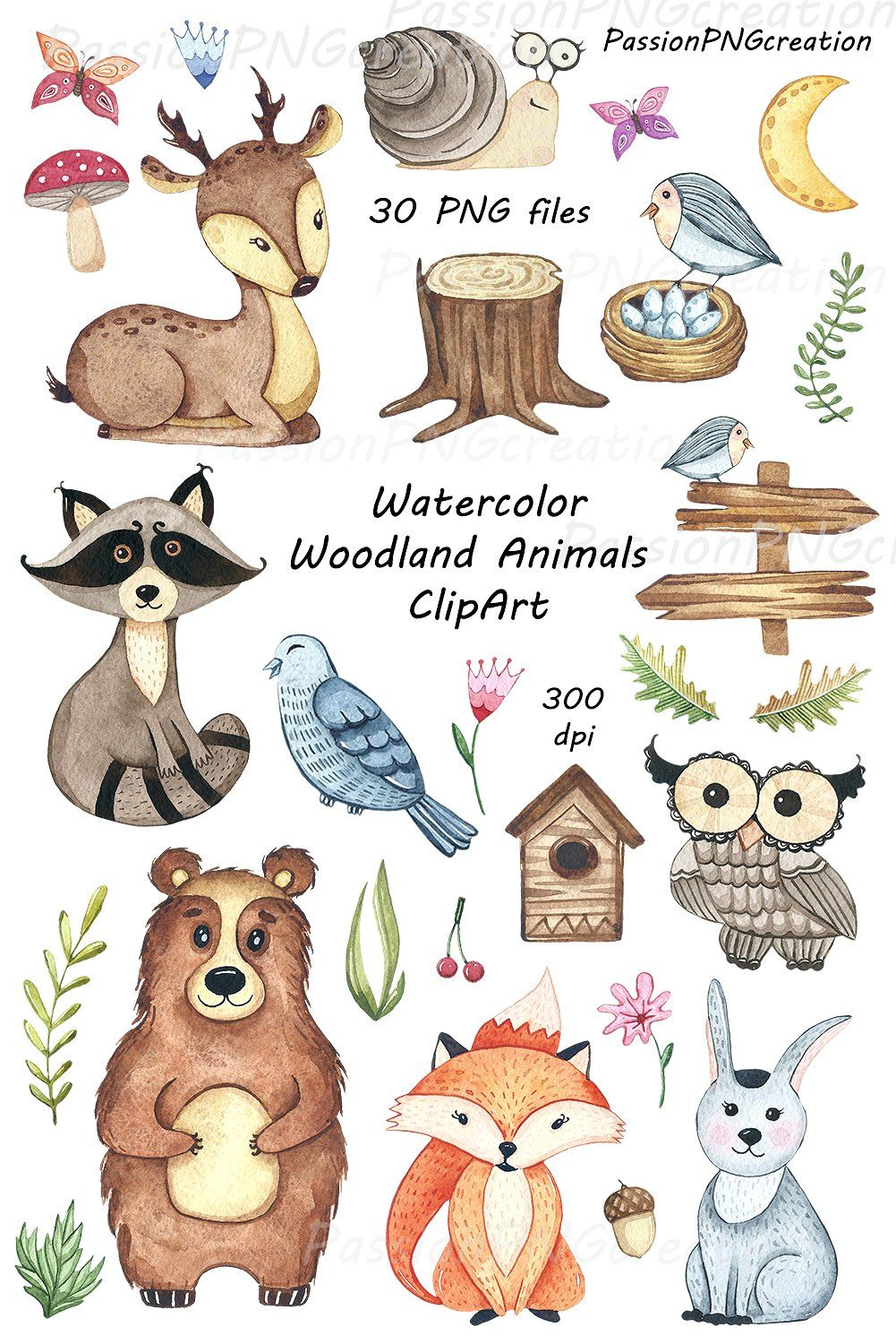 Watercolor Woodland Animals Clipart Animal Clipart Woodland Animals Etsy Watercolor