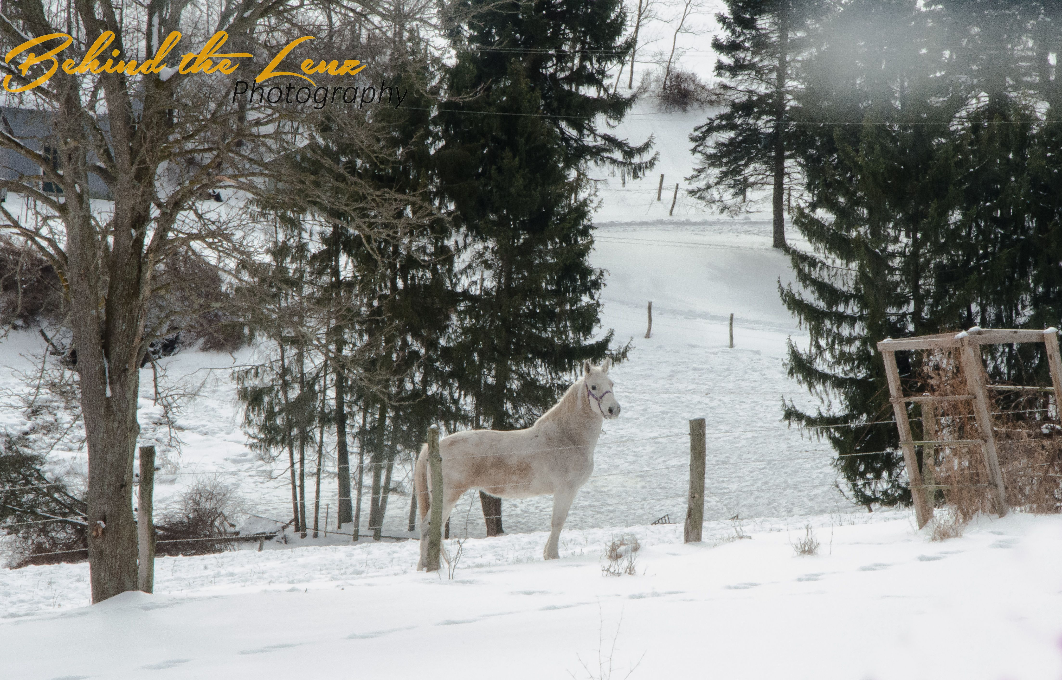 Angel a Percheron Quarter Horse in the snowy pasture in Horses ‹ Photography From Behind The Lenz