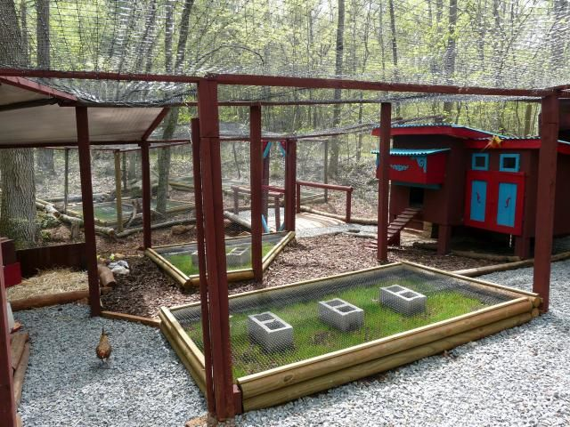 Arianna\'s Chicken Coop - BackYard Chickens Community- What a great ...
