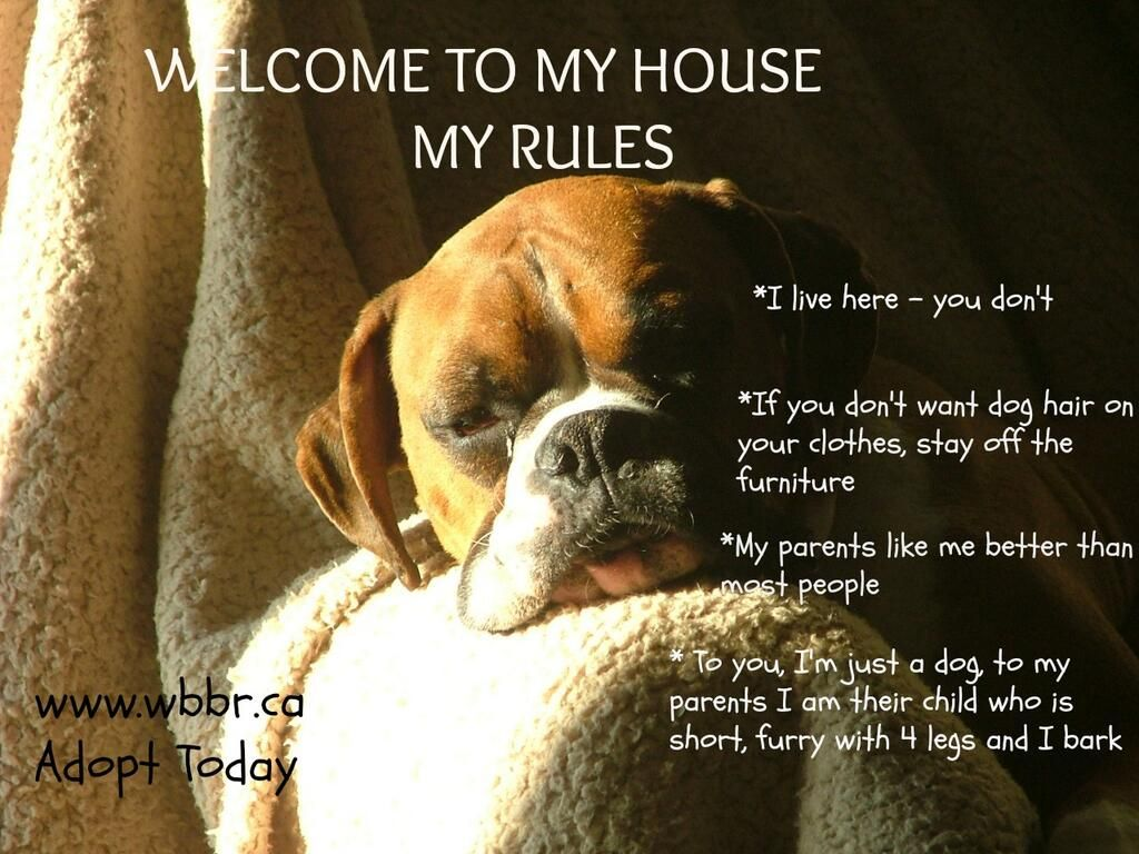 Our house our rules puppies pinterest mascotas perros