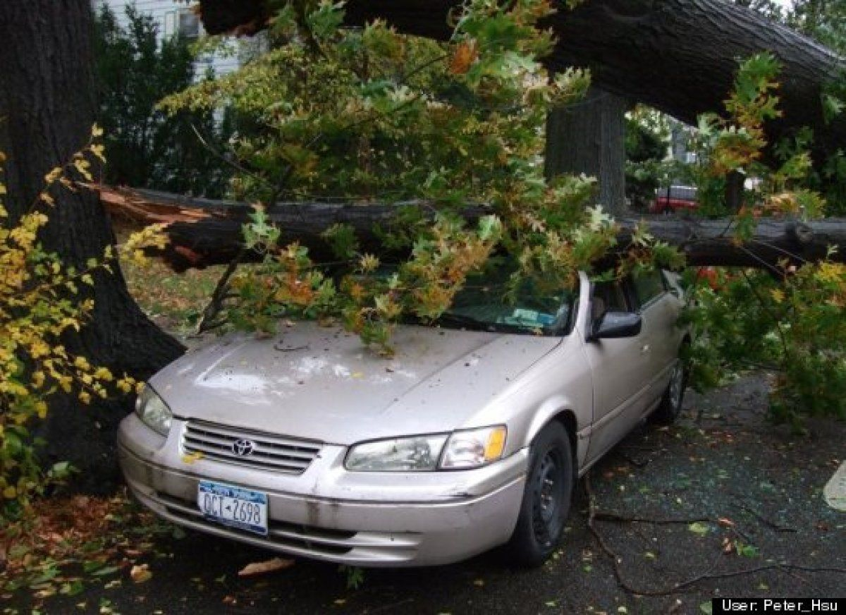 Car smashed by tree in flushing new york hurricane