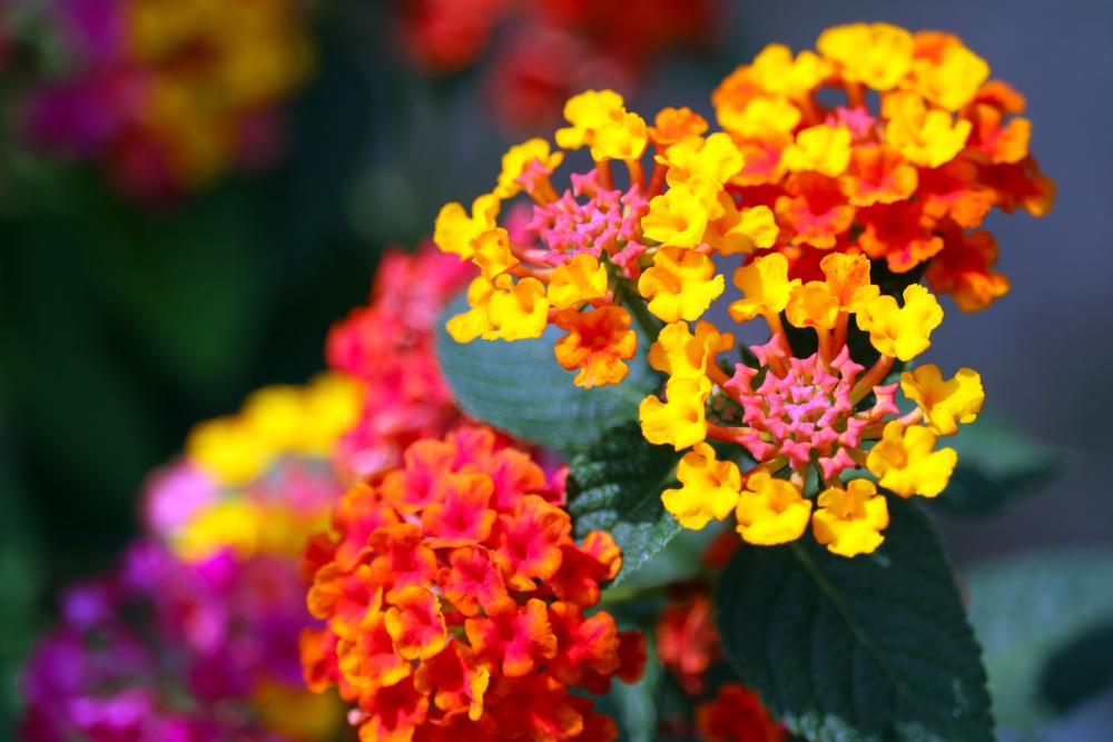 Pflanzen für die pralle Sonne Die Top 10 für Garten