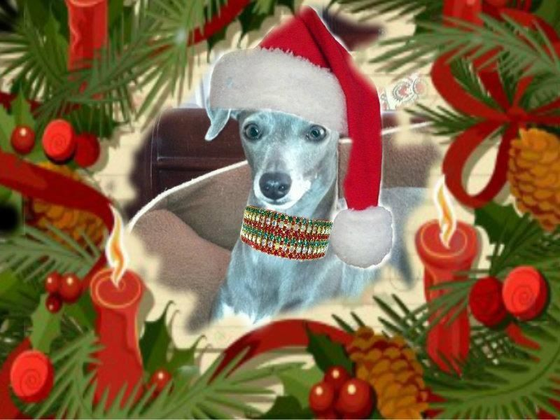 Lily's been photoshopped for Christmas!  Lily looks like our Busy Girl.  Fun pic! kc