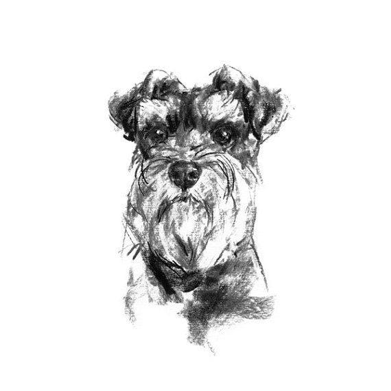 Schnauzer Drawing Easy: Pin By Diana Parish On Things To Sketch