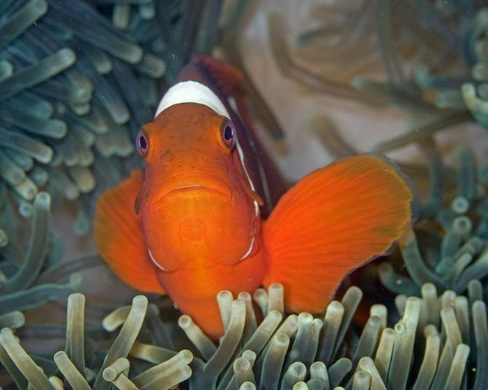 Hot Fresh Pics: Beautiful Sea Creatures   Beautiful