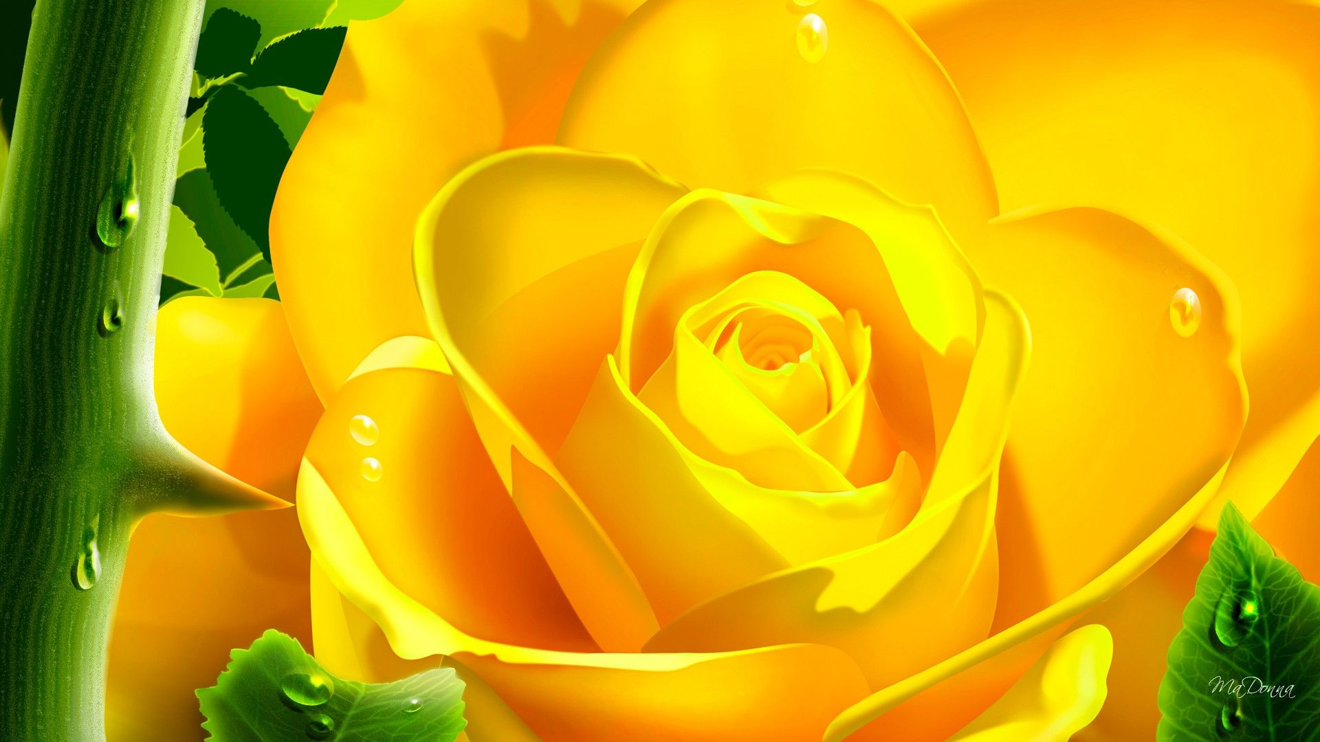 yellow rose flowers wallpapers the best flowers ideas 1920 1080