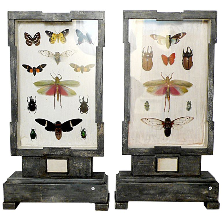 A Rare Natural Specimen: A Collection of Insects in a Pair of Wooden Show Cases