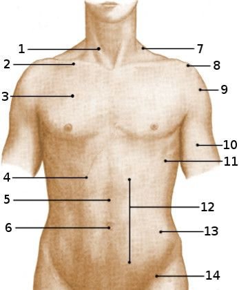 Free anatomy quiz - Surface anatomy of the torso, anterior | A&P.1 ...