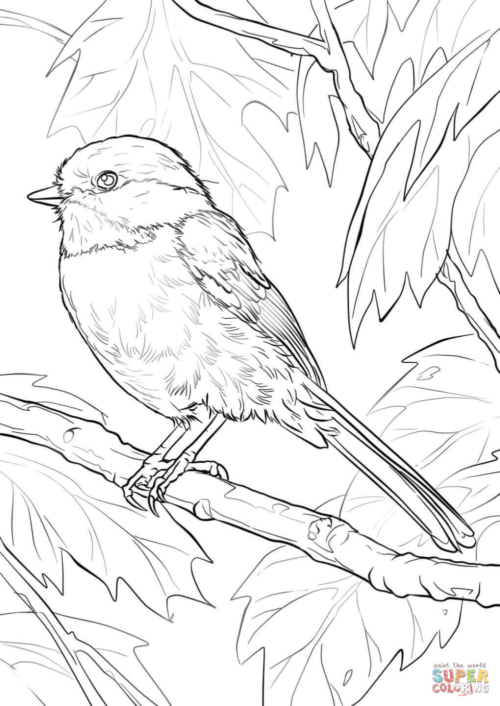 Black Capped Chickadee Coloring Page Free Printable Coloring Pages Bird Coloring Pages Coloring Pages Nature Free Printable Coloring Sheets