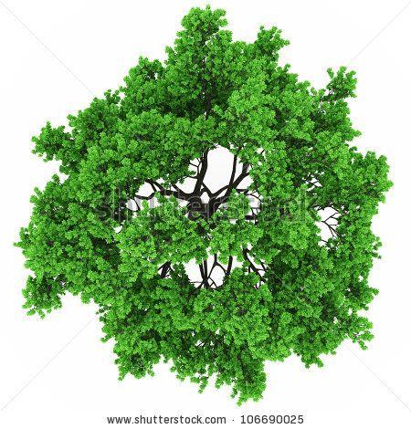 Tree Top View In 100mpix By Photoart985 Via Shutterstock Trees Top View Tree Plan Tree Tops