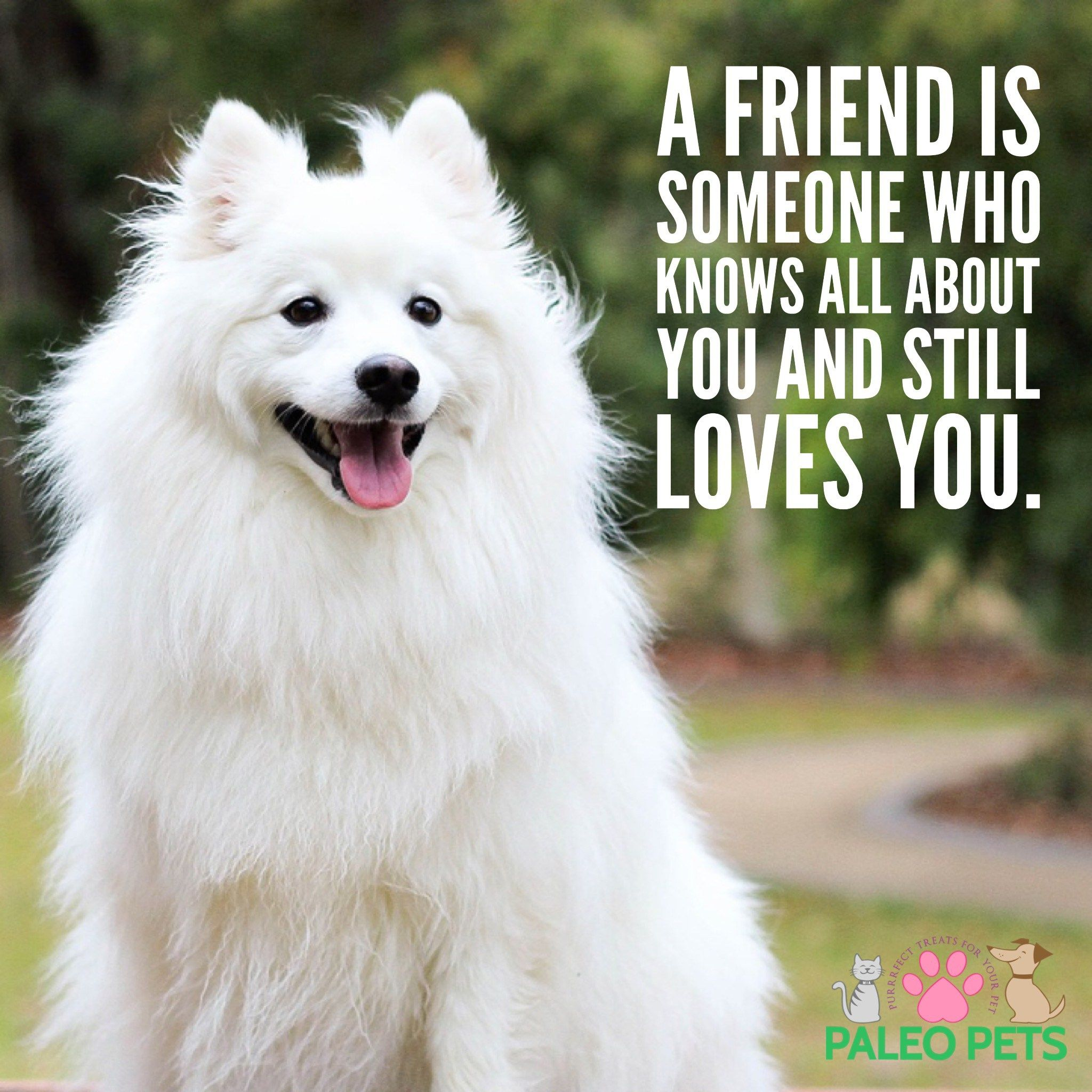 Have A Wonderful Wednesday Love Friends Pets Dogs Paleopets Pets Cute Animals Dogs
