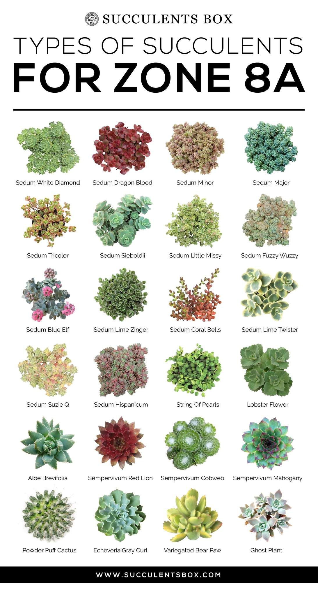 CHOOSING SUCCULENTS FOR ZONE 7 & 8 - TEXAS, GEORGIA, VIRGINIA AND NORTH CAROLINA