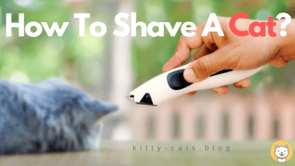 How to shave a cat kitty cats blog silly cats pretty