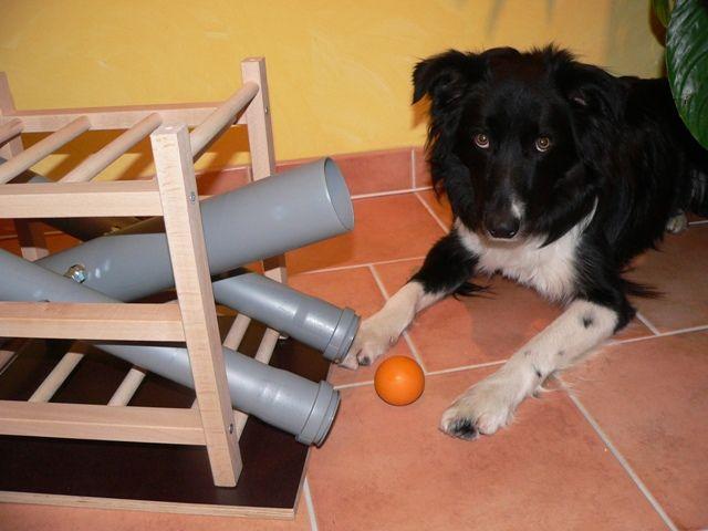 leckerchen und ballspender zum nachbauen partner hund magazin hund hunde hunde spiele und. Black Bedroom Furniture Sets. Home Design Ideas