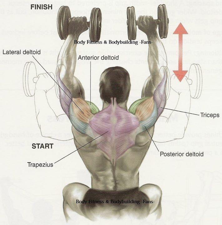 23+ Exercícios para Ombros Sequência completa para Hipertrofia