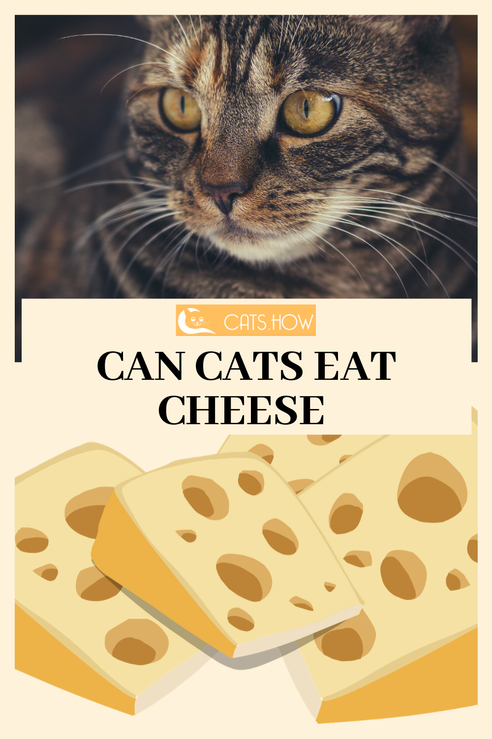 Can Cats Eat Cheese Wellness Cat Food Best Cat Food Cat Food