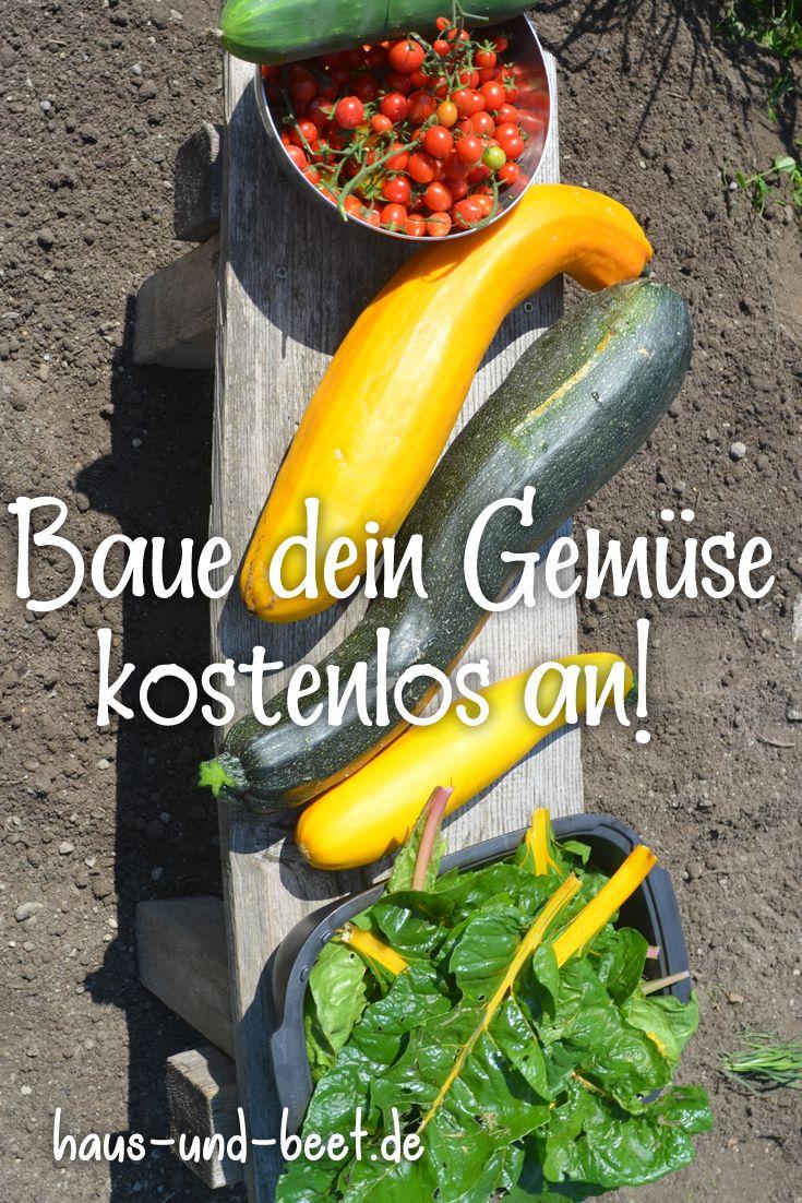 Die Anzucht von Gemüsesamen Saatgut selbst erzeugen Anleitung Selbstversorger