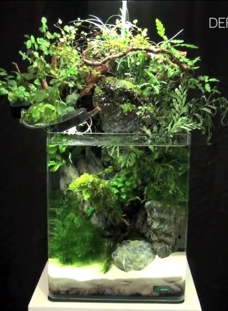 Bushy Top Europeans Have Been Doing Tanks Like This For Decades