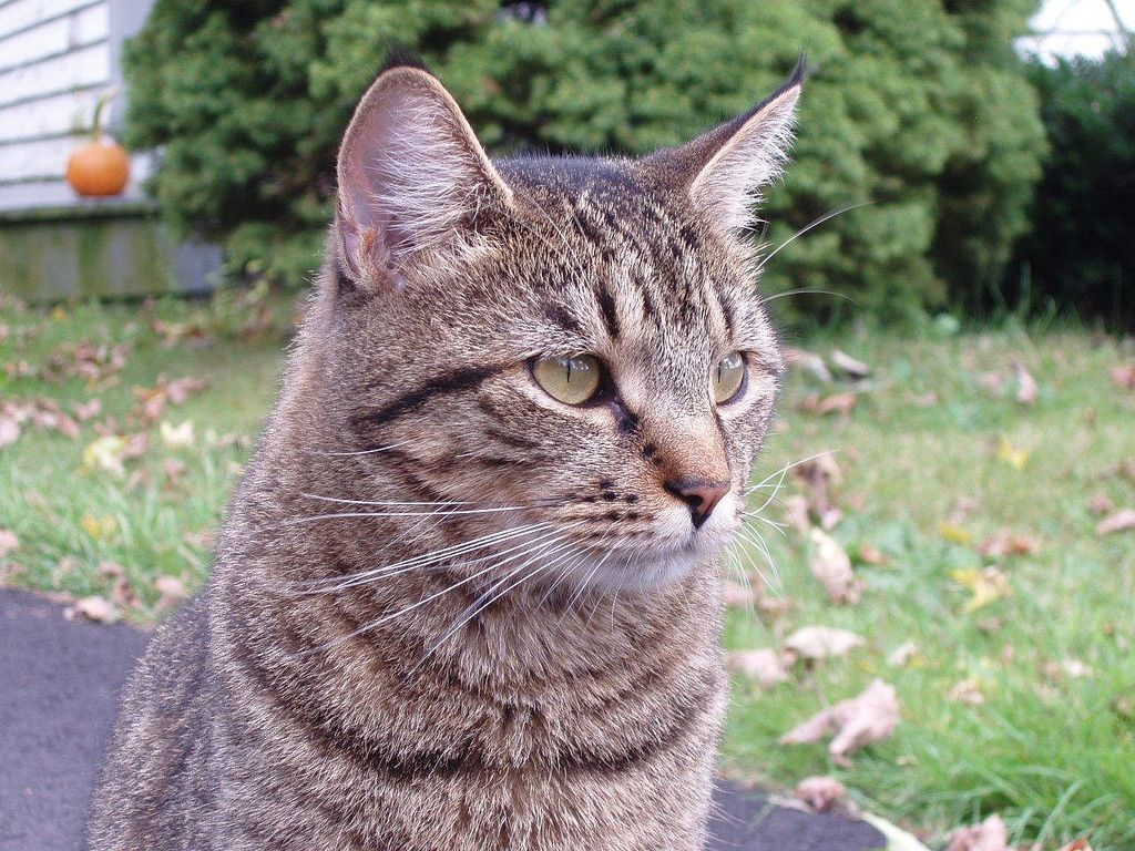 Why Your Cat Should Stay Indoors Part I Cats Outdoor Cats Indoor Cat