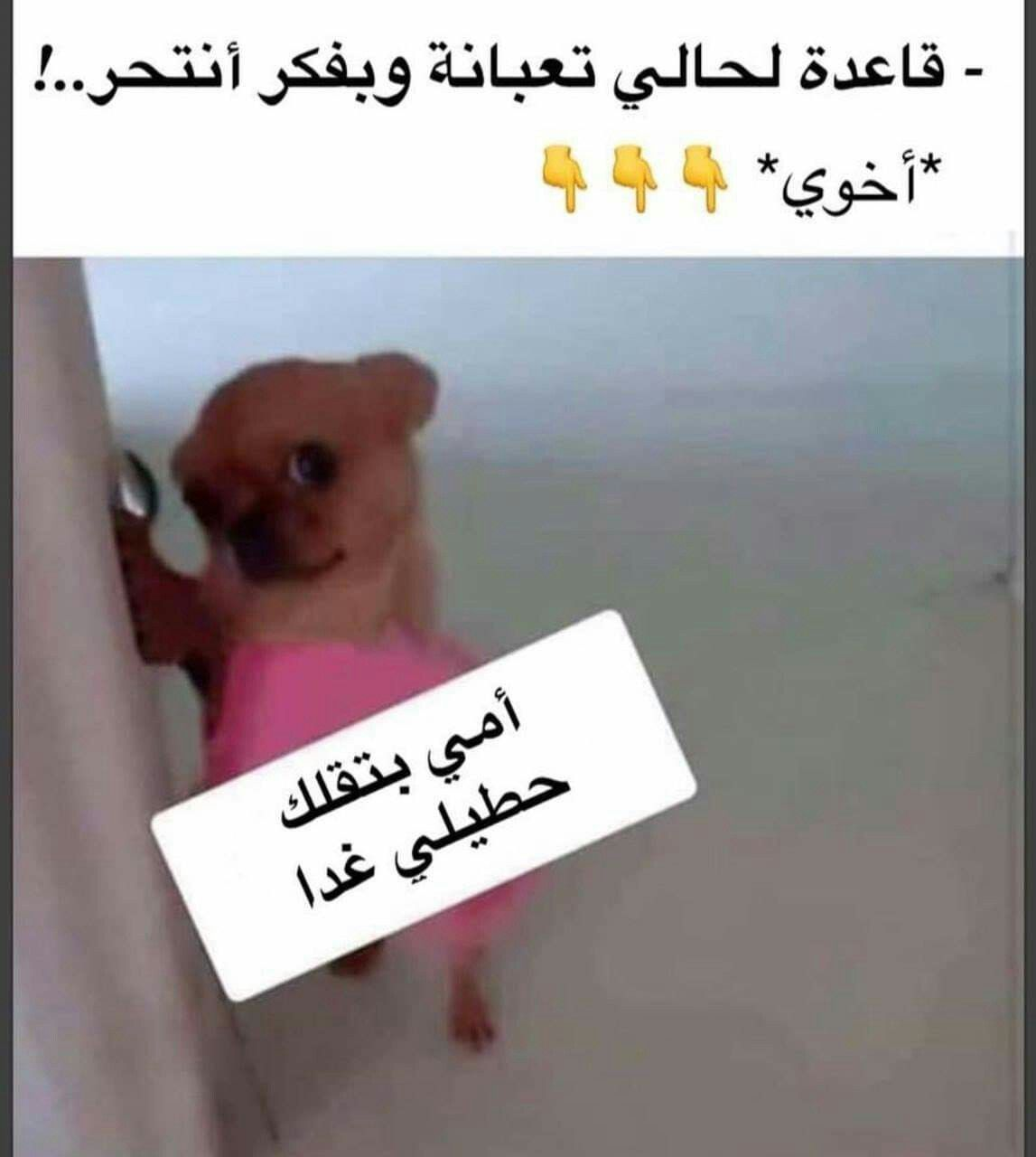 وقتها جد اتمنى انتحر Fun Quotes Funny Funny Baby Quotes Dora Funny