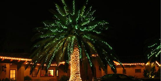 10 best Christmas & Outdoor Lights Holiday Palm Trees Warm Winter ...