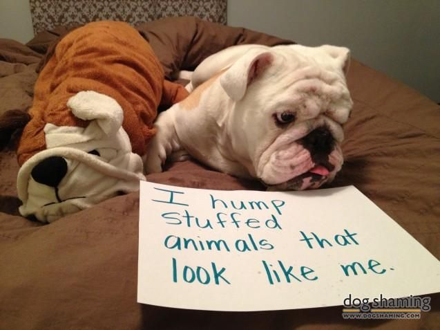 I Hump Stuffed Animals That Look Like Me Chunk Dog Shaming