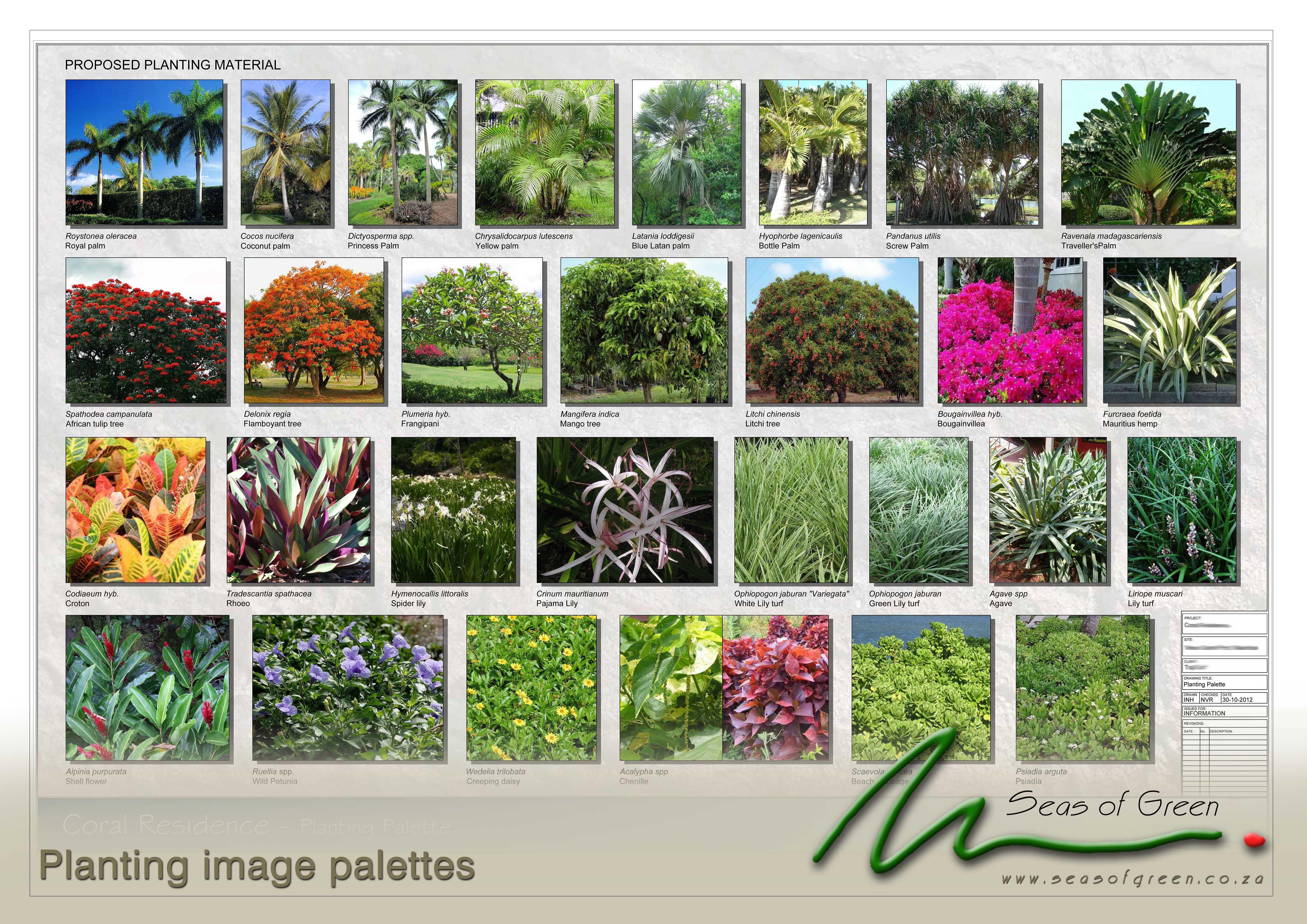 Mauritian Planting Palette Landscaping Plants Landscape Design Garden Plants
