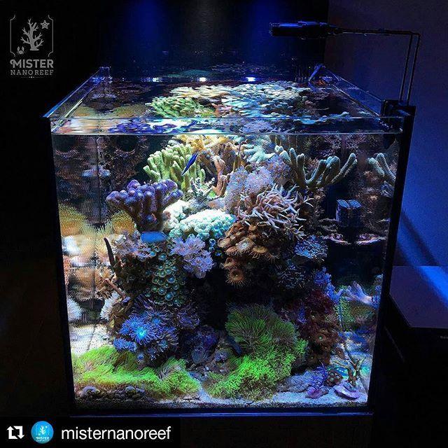 Cool Nano Reef By Misternanoreef Just 80l Coral Reef Aquarium Reef Tank Reef Aquarium
