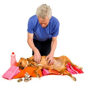 Home Remedies For Dogs Massage Techniques Itchy Dog Skin Dog Skin