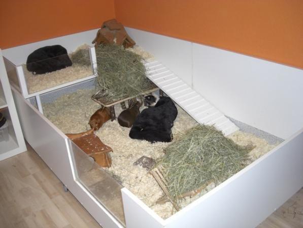die obi selbstbauanleitungen schrauben schweinchen und. Black Bedroom Furniture Sets. Home Design Ideas