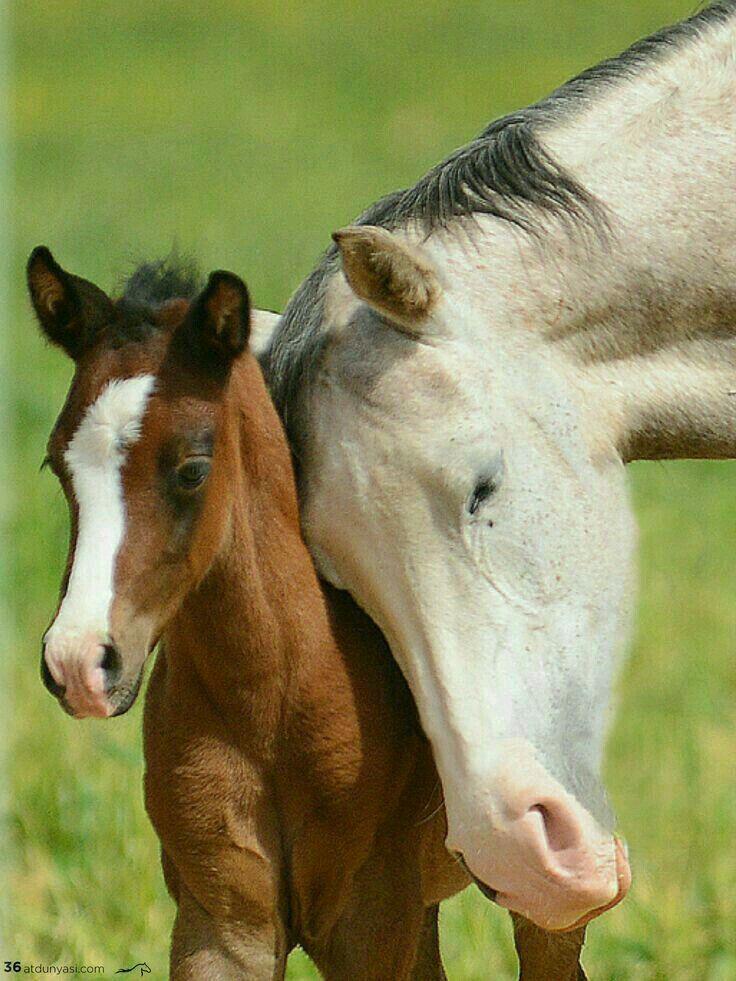 Pin by Latayne Pousson on Horse | Horses, Baby horses ...