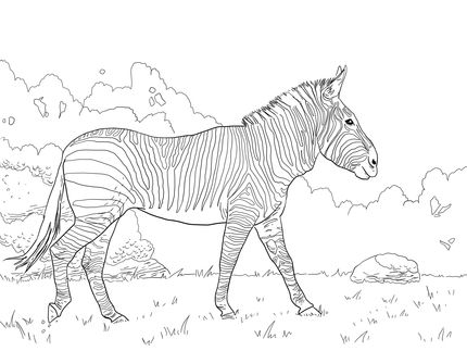 Hartman S Mountain Zebra Coloring Page Supercoloring Com Zebra Coloring Pages Horse Coloring Pages Animal Coloring Books