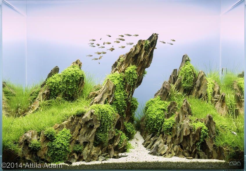 The Magic Of The Internet Aquascape Design Aquascape Aquarium Aquascape