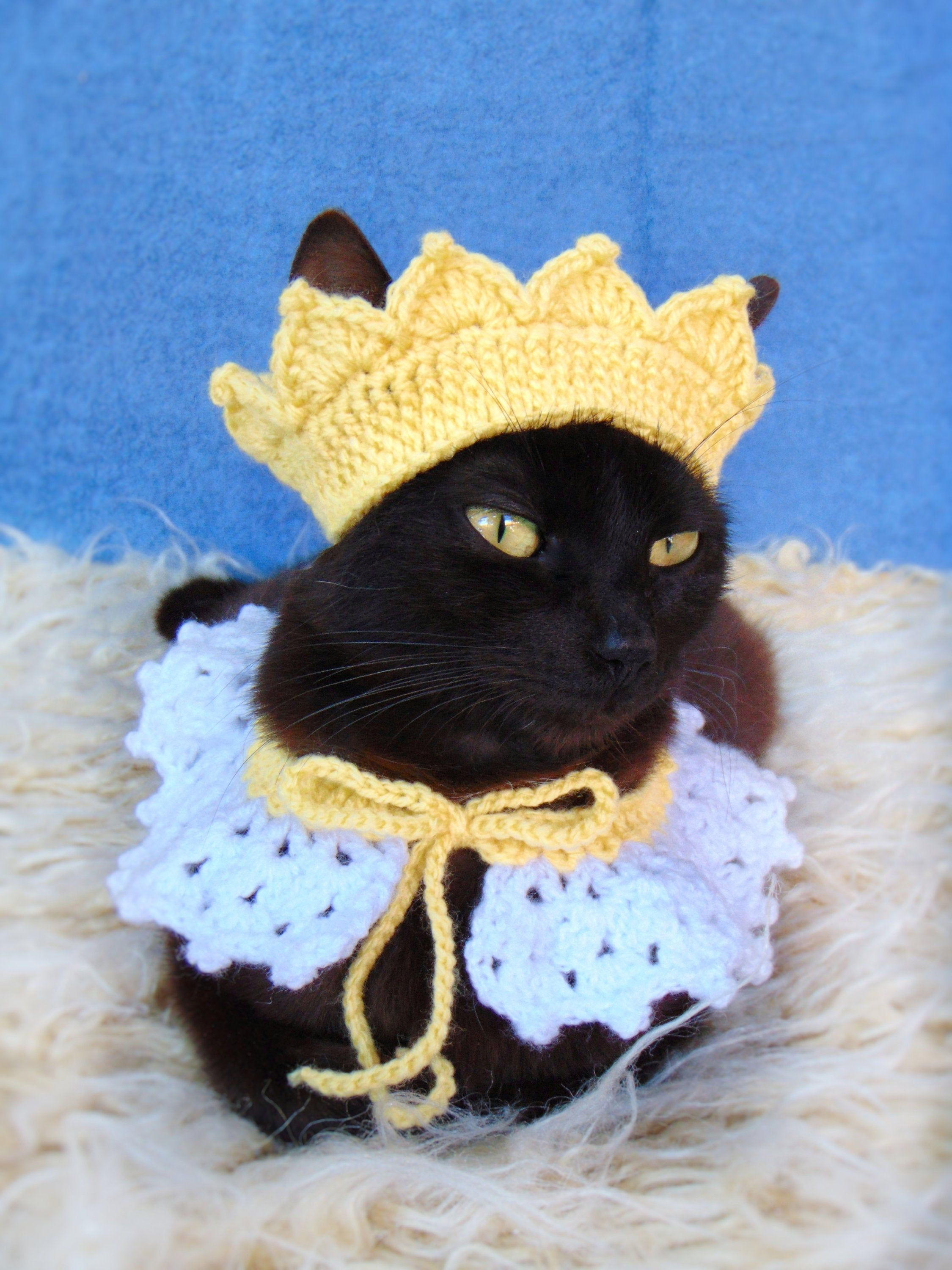Crown and collar for cat, Princess cat outfit, Headpiece for kitten, kitty collar, Cat accessories, Gift for cat lover