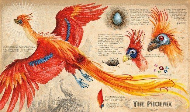 Voici les premières images du Harry Potter et la chambre des secrets illustré #beautysecrets