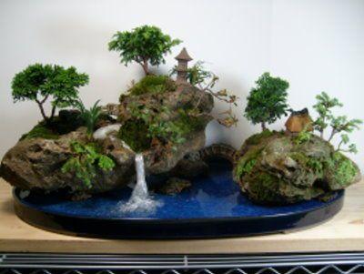 Pin En Bonsai Tree Basics With Examples
