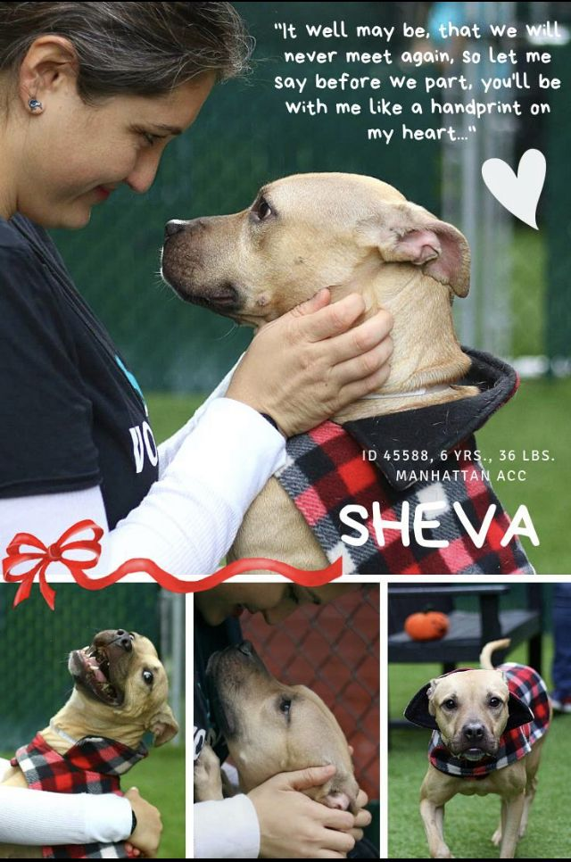 SHEVA ADOPTED ️ ️10/2018 NEEDS HELP😥😥 Nyc dogs, Dogs