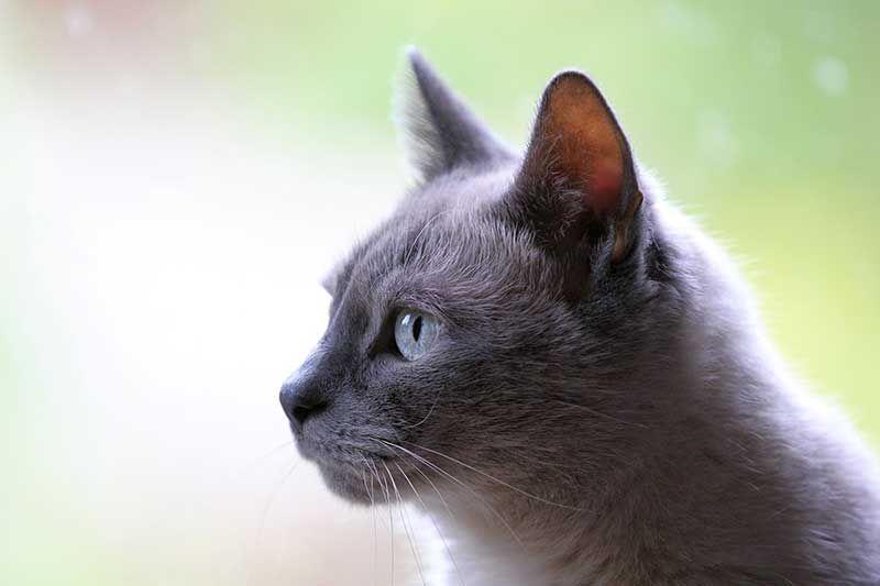 Why Build Cat Fence Beautiful Cats Cat Behavior Cat Shots