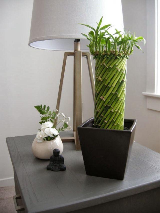 Glucksbambus Pflege Kubel Form Spirale Zen Ambiente Garden