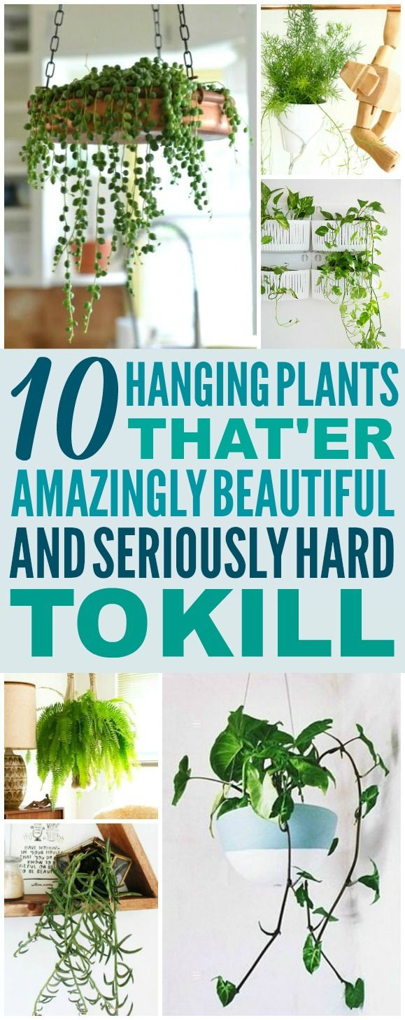 These 10 Low Maintenance Hanging Plants are